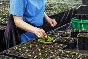Start Organic Garden from Seeds
