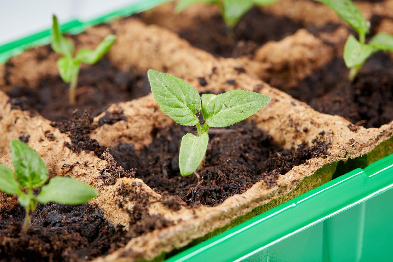 Start Organic Garden Seeds